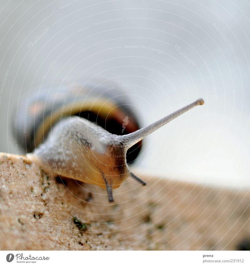 Eine kleine Schnecke Natur blau Tier Umwelt Wand Stein Mauer Linie braun weich Glätte krabbeln Fühler schleimig