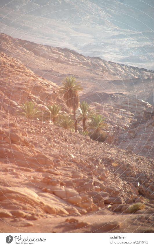 Oase Wasser Ferne Sand Wärme Stein Felsen Wüste heiß Palme Dürre Quelle Ödland Ägypten karg Naher und Mittlerer Osten steinig