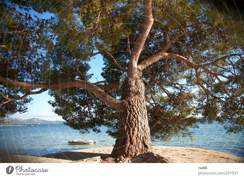Sonnenschirm Pflanze Wasser Sommer Baum Küste Meer Kraft Ferien & Urlaub & Reisen Farbfoto Außenaufnahme Sonnenlicht Mittelmeer Menschenleer