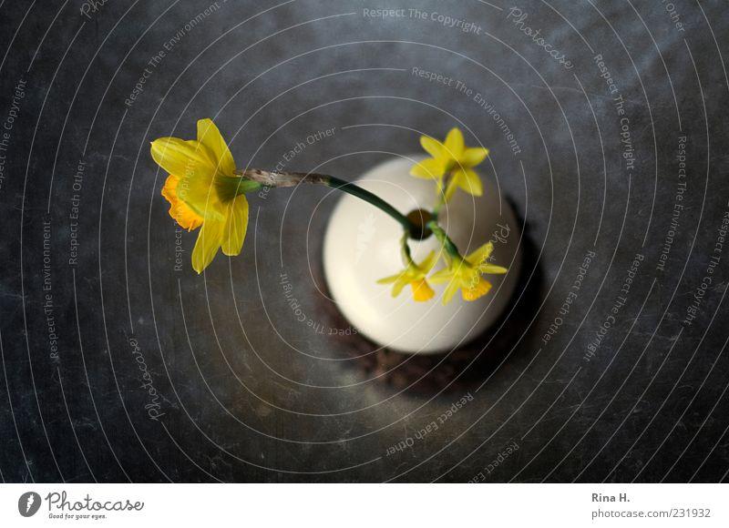 OsterStill Blume gelb Frühling Blüte Kunst Lifestyle Dekoration & Verzierung Blühend Ostern Stillleben Vase Vogelperspektive Narzissen Menschenleer