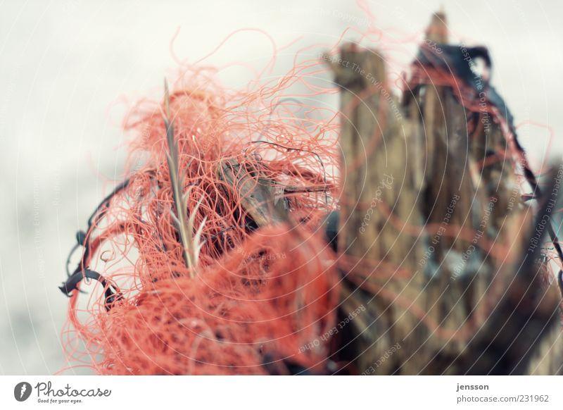 der rote Faden Natur rot Umwelt Holz dreckig Kunststoff Schnur chaotisch durcheinander Knoten Rest Umweltverschmutzung unordentlich Strandgut