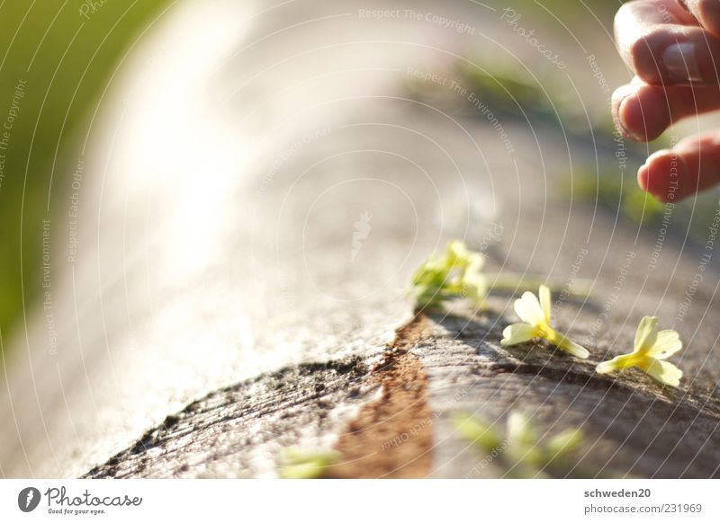 jäger und sammler Natur Hand grün Baum Pflanze Sommer Blume Freude gelb Umwelt Holz Blüte Frühling braun liegen Finger