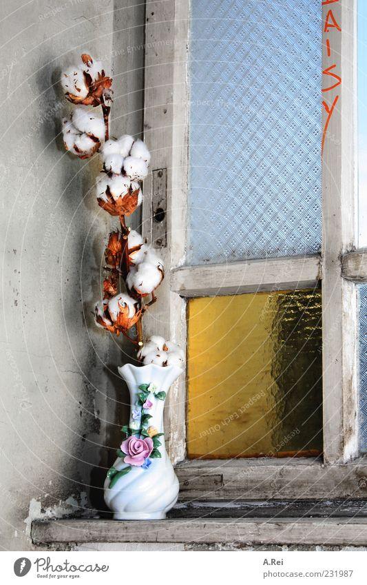 trostlos? Pflanze Blume Grünpflanze Topfpflanze Baumwolle Vase Mauer Wand Fenster Flur blau gelb gold grau Farbfoto Innenaufnahme Nahaufnahme Menschenleer