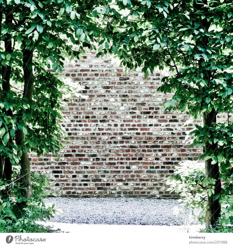 am ende ist ende Umwelt Natur Frühling Sommer Klima Wetter Schönes Wetter Pflanze Baum Blatt Grünpflanze Garten Park Mauer Wand Fassade außergewöhnlich Design