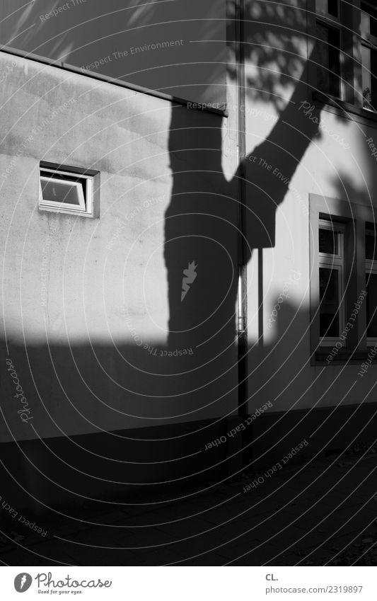 schattenbaum Schönes Wetter Baum Haus Mauer Wand Fenster außergewöhnlich dunkel Schwarzweißfoto Außenaufnahme Menschenleer Textfreiraum unten Tag Licht Schatten