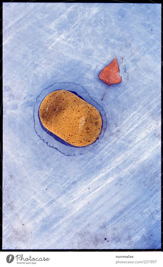Herzblatt & Schwamm Blatt Umwelt Kunst außergewöhnlich Stimmung liegen verrückt Zeichen rein trashig Rätsel gleich unschuldig Schwamm Collage Silhouette