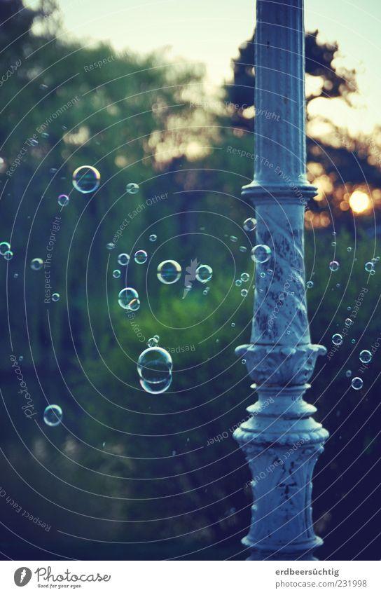 mag ic bubbles Natur grün Baum Pflanze Sonne Frühling träumen Park fliegen Fröhlichkeit Sträucher rund Säule Duft Schweben Seifenblase