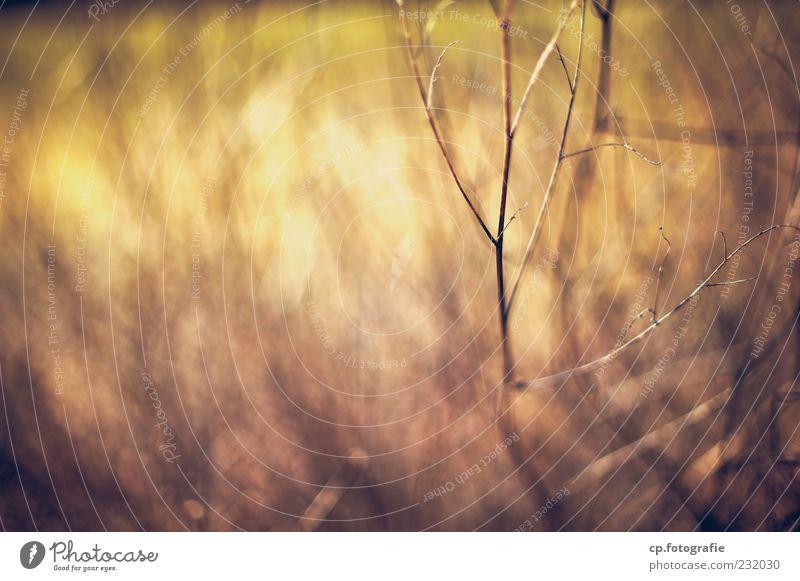 Bounce Natur Pflanze braun natürlich Sträucher Schönes Wetter Zweig