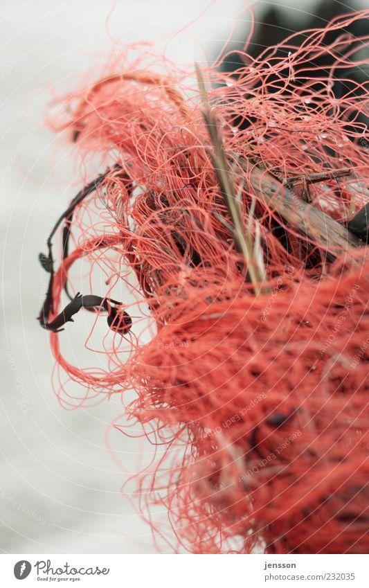 wirrwarr Umwelt Natur Holz Kunststoff dreckig rot chaotisch Ordnung Umweltverschmutzung durcheinander verwickelt Schnur Strandgut Fundstück Müll Knoten