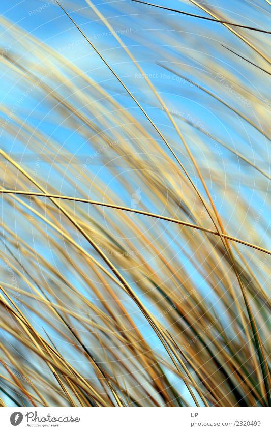 Sommergefühl Lifestyle Wellness Leben harmonisch Wohlgefühl Zufriedenheit Sinnesorgane Erholung ruhig Meditation Ferien & Urlaub & Reisen Sommerurlaub Sonne