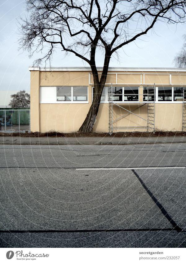 kuschelgruppe Renovieren Baustelle Umwelt Wolkenloser Himmel Baum Industrieanlage Fabrik Gebäude Fassade Fenster Straße Straßenrand gelb grau Gerüst Einsamkeit