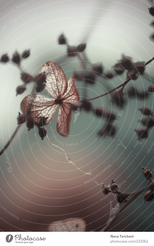 Im Licht Natur alt schön Baum Pflanze Herbst Umwelt Gefühle grau Stimmung ästhetisch Klima Wachstum Wandel & Veränderung Sträucher Vergänglichkeit