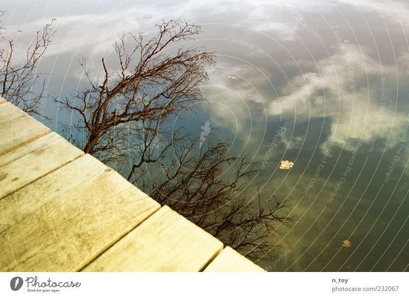 Seeblick Himmel Wasser Baum Wolken ruhig Erholung See Ast Seeufer Steg Holzbrett Wasseroberfläche Maserung Zweige u. Äste laublos Wolkenhimmel