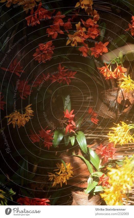 Beauties Natur grün schön rot Pflanze Blume Blatt gelb Blüte Frühling Orange ästhetisch Wachstum leuchten einzigartig Warmherzigkeit