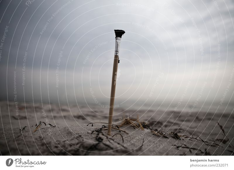 tag am meer #2 Umwelt Natur Landschaft Sand schlechtes Wetter Küste Strand Ostsee Meer Pinsel verblüht dehydrieren trist Einsamkeit Verfall Farbfoto