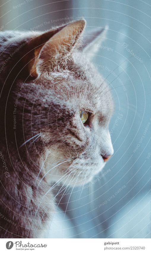 Es wird Herbst Tier Haustier Katze 1 schön Warmherzigkeit Sehnsucht Fernweh Einsamkeit Erschöpfung Tierliebe Hauskatze Fenster Fensterblick kuschlig Tiergesicht