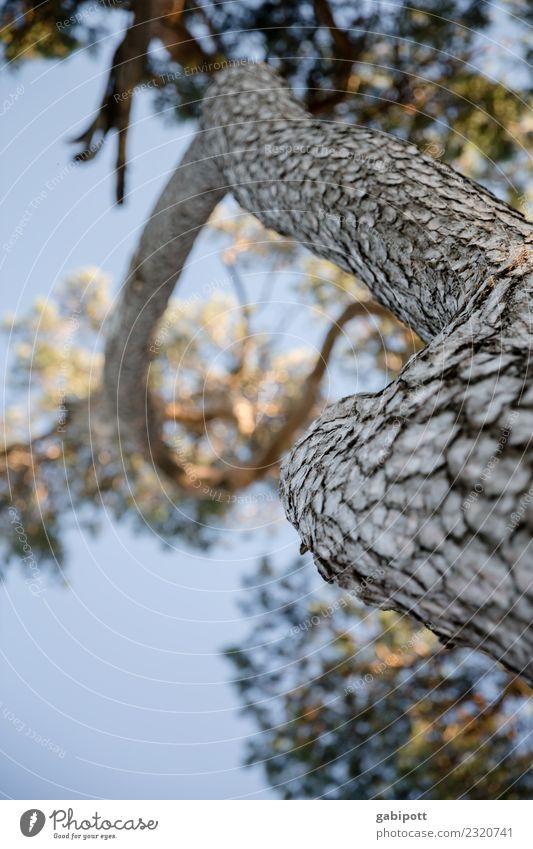 baum von unten Himmel Natur blau Pflanze Sonne Baum Wald Herbst Umwelt natürlich Fröhlichkeit Perspektive Schönes Wetter Freundlichkeit Wolkenloser Himmel