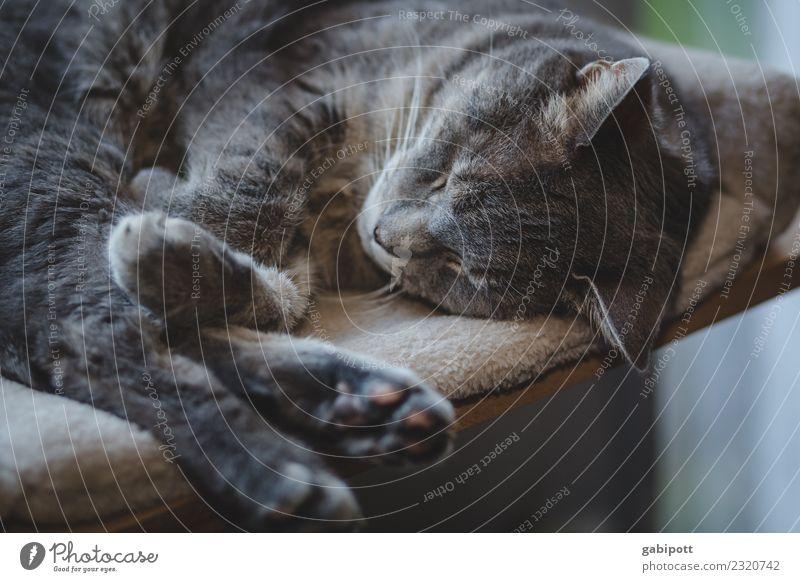 helau harmonisch Wohlgefühl Zufriedenheit Sinnesorgane Erholung ruhig Meditation Tier Haustier Katze 1 genießen schlafen Lebensfreude Nostalgie Wellness