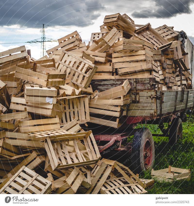 Trecker voll mit Gemüsekisten Arbeit & Erwerbstätigkeit Beruf Gartenarbeit Landwirtschaft Forstwirtschaft Feld Traktor Anhänger viele Obstkiste Ackerbau