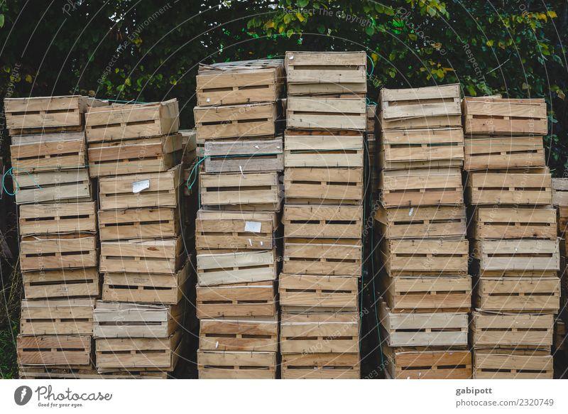 gestapelte Holzkisten Lebensmittel Obstkiste Arbeitsplatz Wirtschaft Landwirtschaft Forstwirtschaft Industrie Handwerk Natur Landschaft Feld