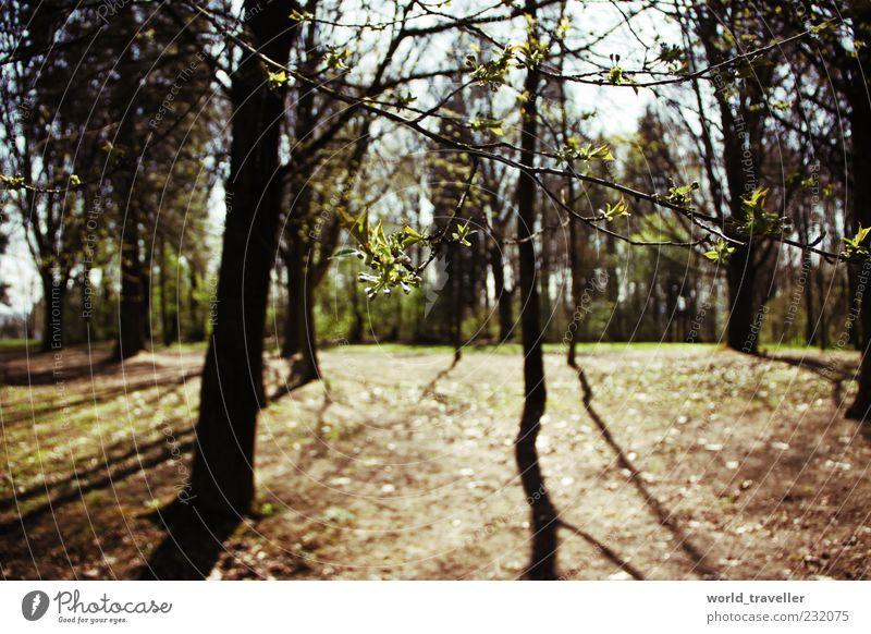 Natur alt grün schön Baum Sonne Blatt Wald Umwelt Leben Frühling Denken wild natürlich Wachstum Zukunft