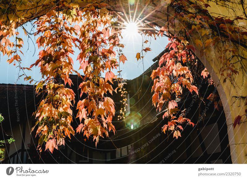 Wein in der Pfalz Himmel Natur blau Pflanze rot Herbst Umwelt Zufriedenheit gold Luft Lebensfreude Schönes Wetter positiv Leichtigkeit