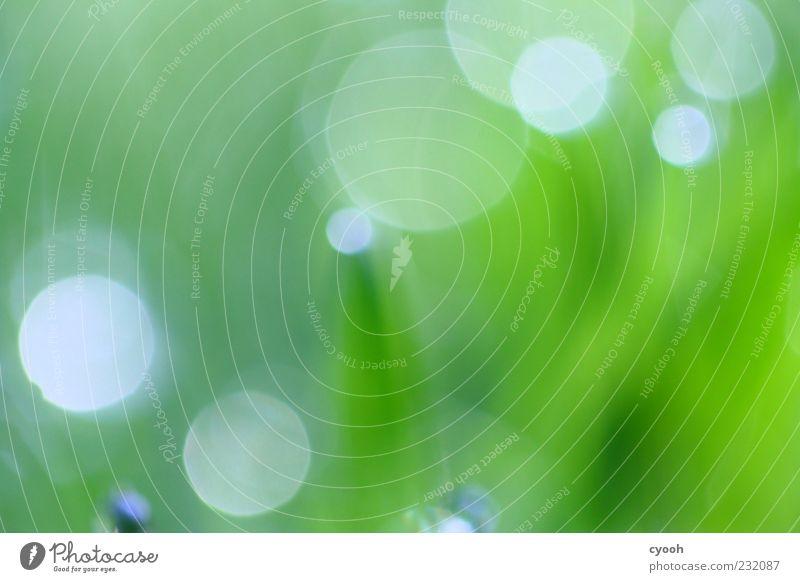 Punkte Natur Pflanze Gras einfach frisch nass saftig grün Unschärfe Erscheinung Lichtspiel Wassertropfen Wiese Farbfoto Außenaufnahme Nahaufnahme abstrakt