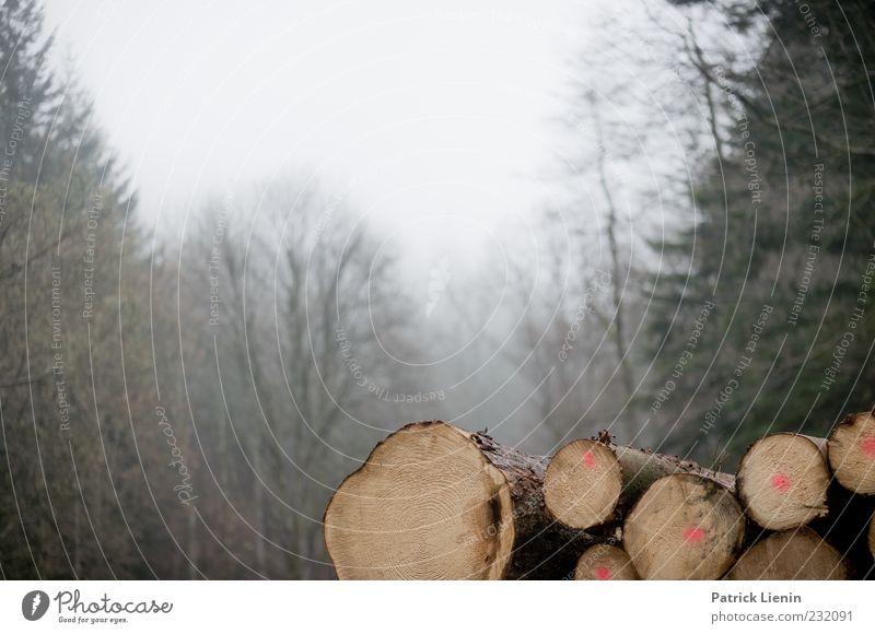 Holz vor der Hütte Umwelt Natur Landschaft Pflanze Urelemente Nebel Baum Nutzpflanze Wald kalt Stimmung Baumstamm Forstwirtschaft Forstwald Nebelschleier