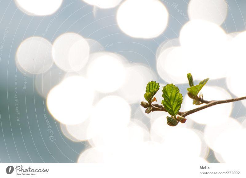 April Umwelt Natur Pflanze Wasser Frühling Blatt Ast Teich See glänzend Wachstum frisch natürlich neu blau grün Hoffnung Leben nachhaltig Farbfoto Außenaufnahme