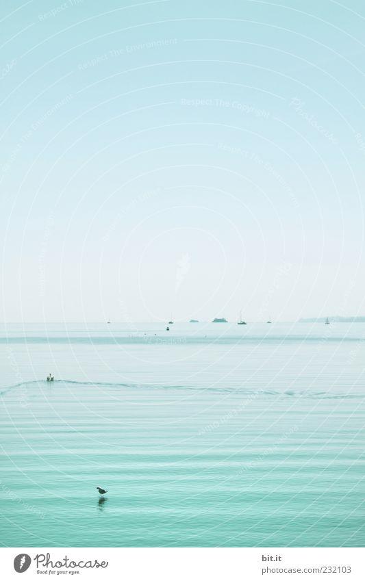 Wasserläufer Himmel Natur blau Sommer Umwelt Landschaft See Wasserfahrzeug nass Urelemente Schönes Wetter Schifffahrt Wolkenloser Himmel hell-blau Bodensee