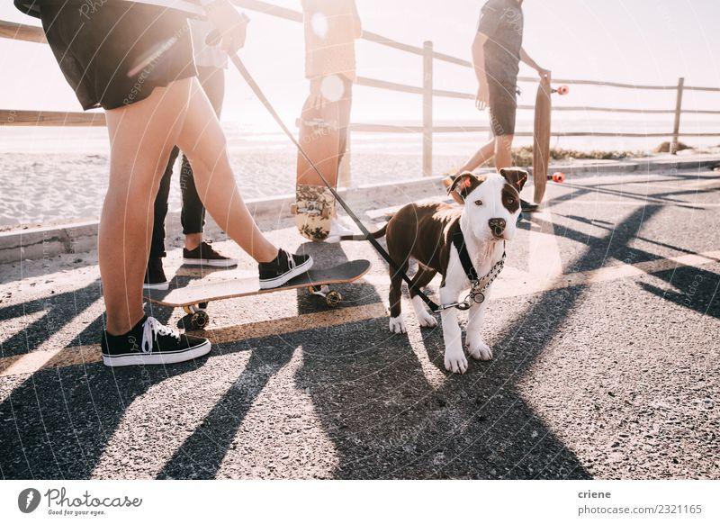 Gruppe von Menschen mit jungem süßen Welpen am Strand Freude Glück Spielen Sommer Frau Erwachsene Familie & Verwandtschaft Freundschaft Menschengruppe Tier