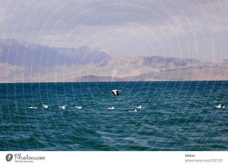 Landschaft des blauen Sees mit Vögeln Ferien & Urlaub & Reisen Sightseeing Sommer Meer Insel Wellen Segeln Umwelt Natur Tier Himmel Wolken Küste Vogel fliegen