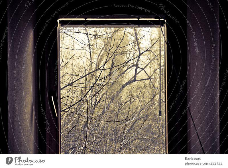 fenster. zum wald. Häusliches Leben Wohnung Umwelt Natur Landschaft Sommer Herbst Pflanze Sträucher Wald Mauer Wand Fenster dunkel Traurigkeit Trauer Angst
