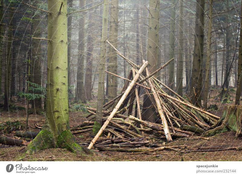 Sweet home Natur Landschaft Moos Wald bauen entdecken gruselig grün Baum Holz Hütte Farbfoto Außenaufnahme Textfreiraum links Morgen Sonnenlicht Tipi Baumstamm