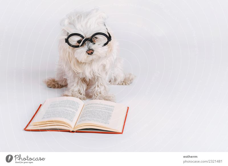Hund Tier lustig Gefühle liegen Kreativität Fröhlichkeit lernen Buch Idee Freundlichkeit Brille Neugier lesen Haustier Konzentration