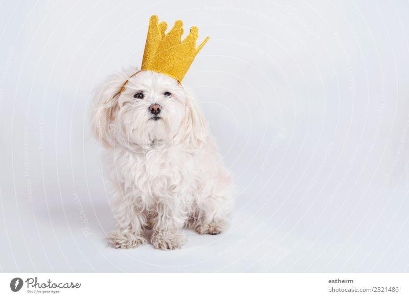 Hund Tier Liebe lustig Glück Zusammensein Freundschaft sitzen Fröhlichkeit Abenteuer Freundlichkeit Haustier Sympathie Tierliebe