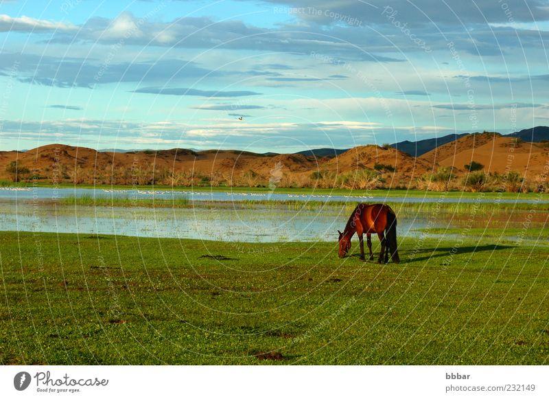 Landschaft eines einzelnen Pferdes auf der Wiese Ferien & Urlaub & Reisen Sightseeing Berge u. Gebirge Umwelt Natur Tier Wasser Himmel Wolken Sommer