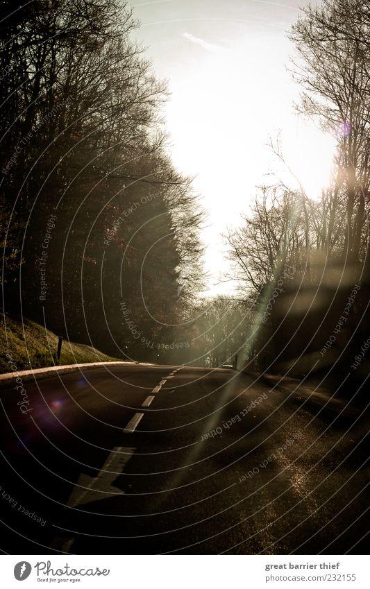 Morning road Baum Straße fahren Asphalt Pfeil Teer Blendenfleck Zweige u. Äste Fahrbahnmarkierung Dämmerung Reflexion & Spiegelung Mittelstreifen