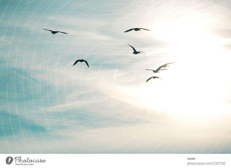 Fly away with me Himmel Natur Sonne Tier Umwelt Bewegung Freiheit hell Stimmung fliegen Vogel Luft wild Wildtier Zukunft Tiergruppe