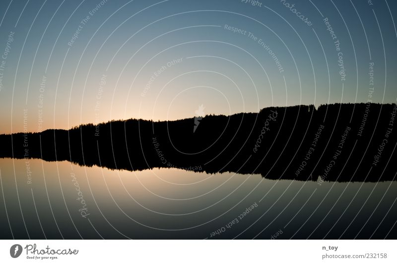 Der Wald spiegelt sich wieder Natur Landschaft Wasser Himmel Wolkenloser Himmel Horizont Sonnenaufgang Sonnenuntergang Sonnenlicht Baum Küste Seeufer Einsamkeit