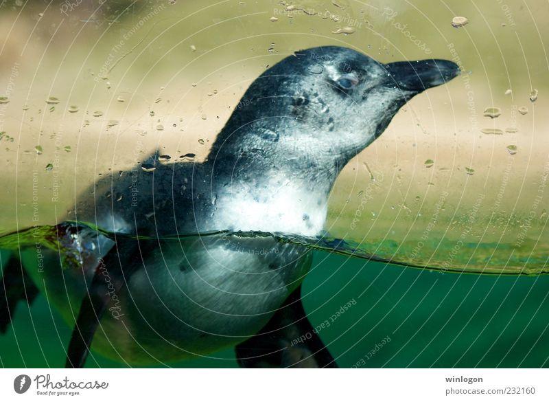 Natur Wasser Meer grün blau Ferien & Urlaub & Reisen Tier kalt springen Fenster grau Umwelt Tourismus beobachten wild Schwimmen & Baden