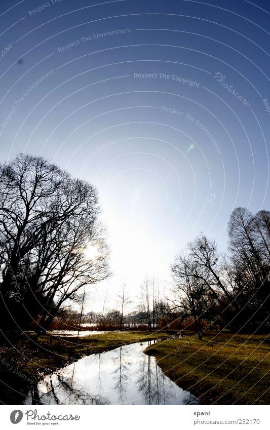 riverside Pflanze Wasser Schönes Wetter Baum Park Wiese Teich Fluss Menschenleer Frühlingsgefühle Vorfreude Außenaufnahme Textfreiraum oben Tag