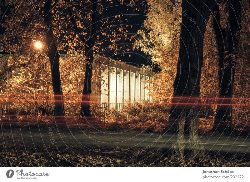 4trees1car1indoorswimmingpool Baum rot Blatt schwarz gelb Straße PKW Lampe Park Deutschland Beleuchtung braun gold Verkehr Geschwindigkeit ästhetisch