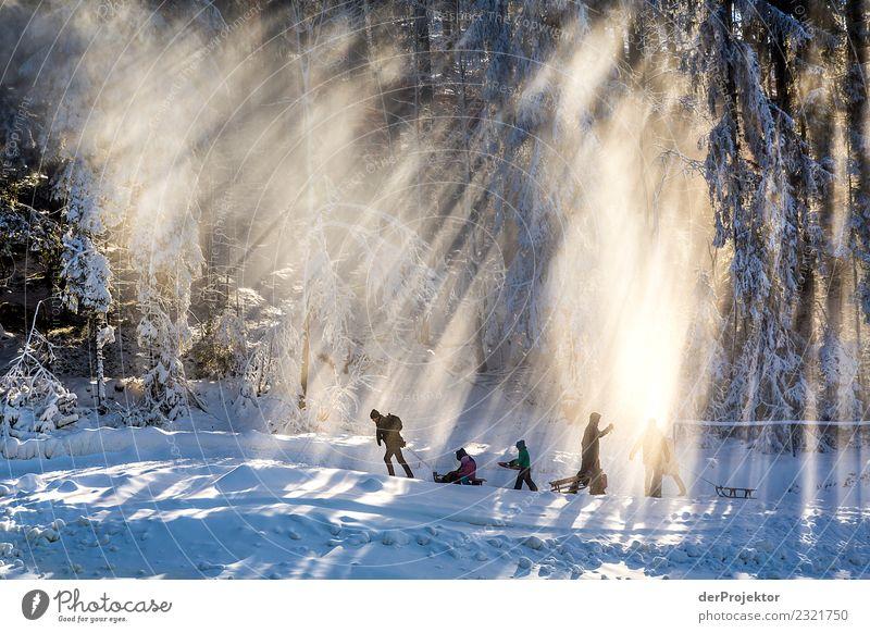 Schlitten ziehen im Harz Ferien & Urlaub & Reisen Tourismus Ausflug Abenteuer Freiheit Expedition Winterurlaub wandern Fitness Sport-Training Umwelt Natur Eis