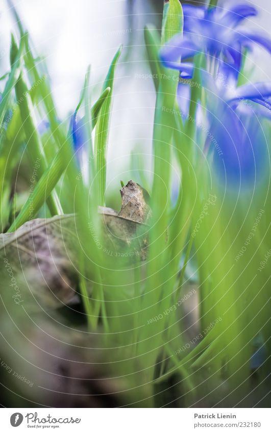 April Garten Umwelt Natur Pflanze Erde Frühling Wetter Blume Gras Blatt Grünpflanze Wildpflanze schön trocken weich blau grün Botanik frisch Wiese Farbfoto