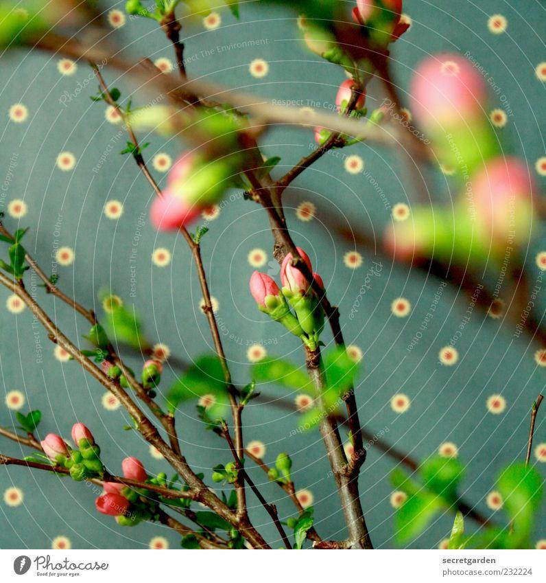 verwirrend voll Tapete Pflanze Frühling Sträucher Blatt Blüte Duft frisch retro braun grün rosa Frühlingsgefühle Farbe Kitsch durcheinander Punktmuster