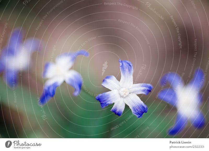 if you leave me Natur blau grün schön Pflanze Blume Umwelt Blüte Frühling natürlich zart Botanik Blütenblatt Vignettierung intensiv knallig