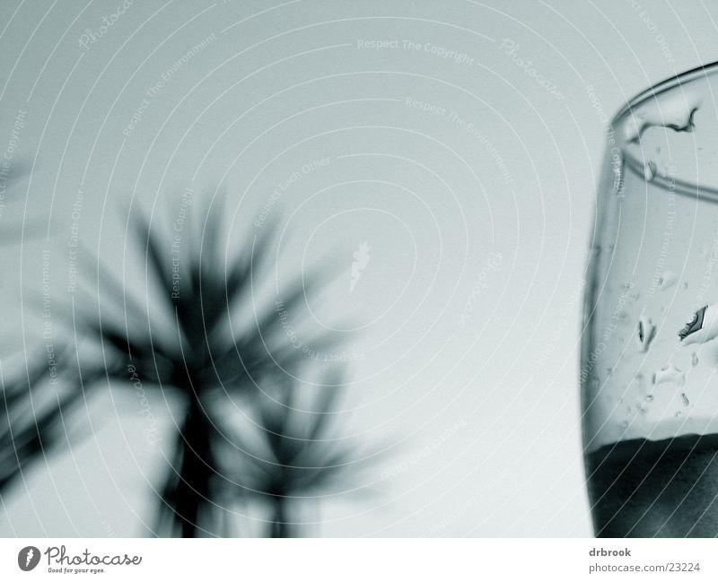Schwertfisch in Spanien Palme Strand Ferien & Urlaub & Reisen Sommer Erholung Fototechnik Glas Detailaufnahme makrohimmel Wassertropfen Schwarzweißfoto Himmel