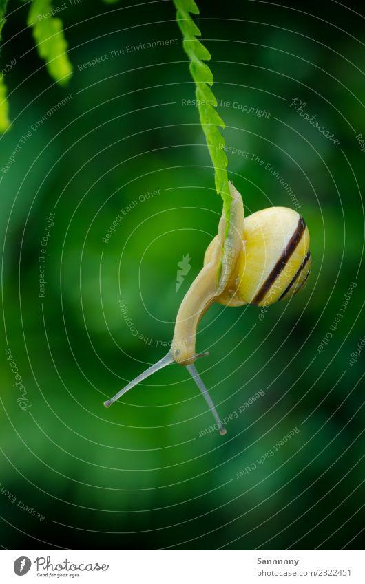 Abhängen Natur schön Farbe grün Erholung Tier gelb Wiese klein Garten außergewöhnlich Kreativität Abenteuer Schönes Wetter fantastisch einzigartig