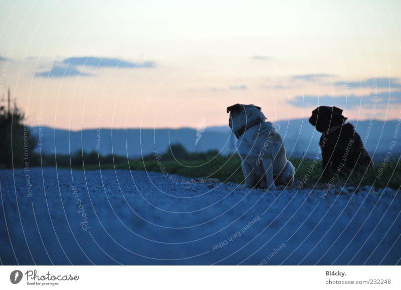 Wie weit noch? Natur Landschaft Erde Himmel Wolken Horizont Sonnenaufgang Sonnenuntergang Baum Gras Menschenleer Tier Haustier Hund 2 Tierpaar Stein Sand